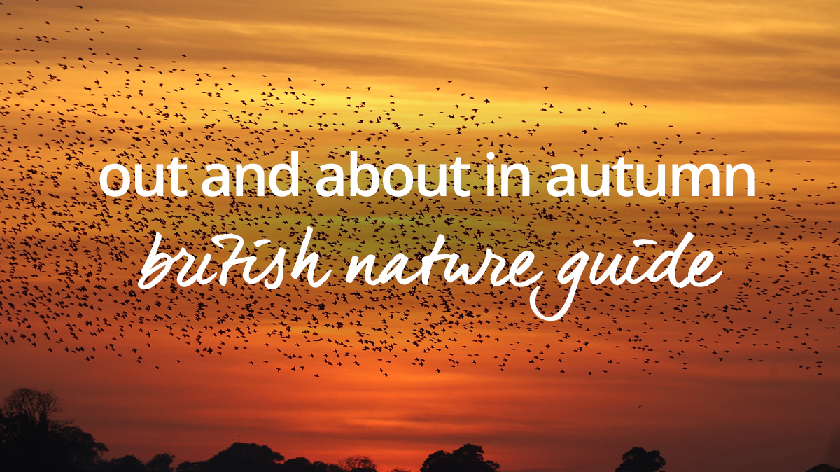 autumn spotters guide
