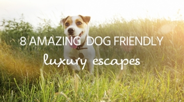 dog friendly escapes