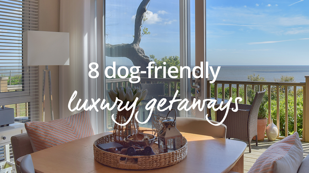 luxury dog friendly
