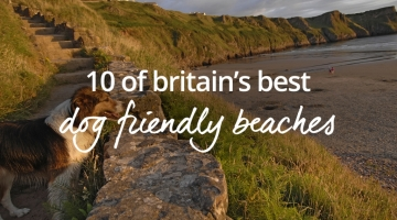 UK's best dog friendly beaches